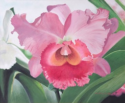 Pink Orchid by Yoshio Hayashi