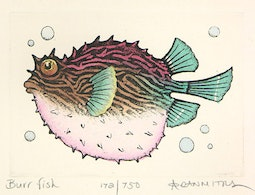 Burr Fish (172/750) by Dan Mitra
