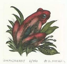 Strawberry (6/750) by Dan Mitra